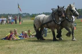 10 en 11 juni Land van Cuijkse Paardendagen te Haps