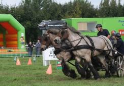 Afbeelding van Land van Cuijkse Paardendagen
