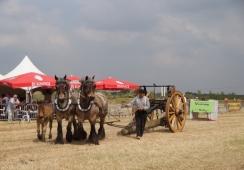 Foto's van Stichting Land van Cuijkse paardendagen Haps
