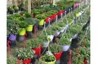 Hen's Perkplanten, Hen Thoonen