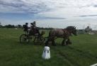 Foto Stichting Land van Cuijkse paardendagen Haps