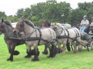 Land van Cuijkse paardendagen te Haps op 11 en 12 juni 2016