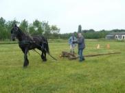 Programma Land van Cuijkse Paardendagen 11 en 12 juni