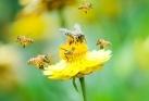 Bijen- en wespensteek, symptomen en behandeling